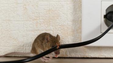 Rodent Infestation Signs | Payne Pest Management