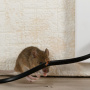 Where Do mice Like To Hide? | San Diego Mouse Control Experts
