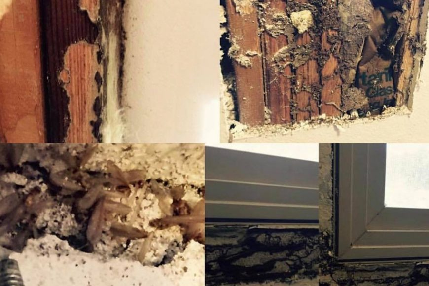This Smell Can Alert You To A Possible Termite Infestation