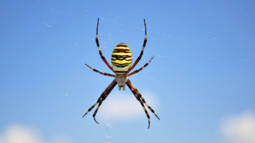5 Fascinating and MUST-KNOW Spiders Facts