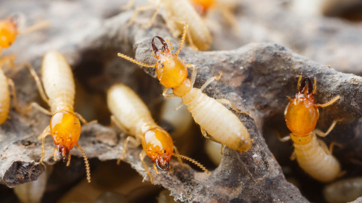 Top 5 Signs You Have A Termite Infestation