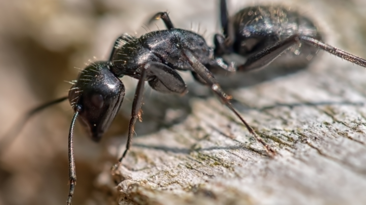 The Anatomy Of An Ant