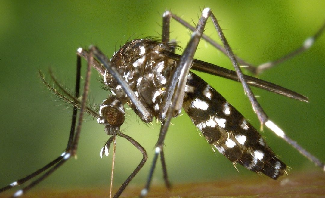 How Drought Affects Mosquitoes