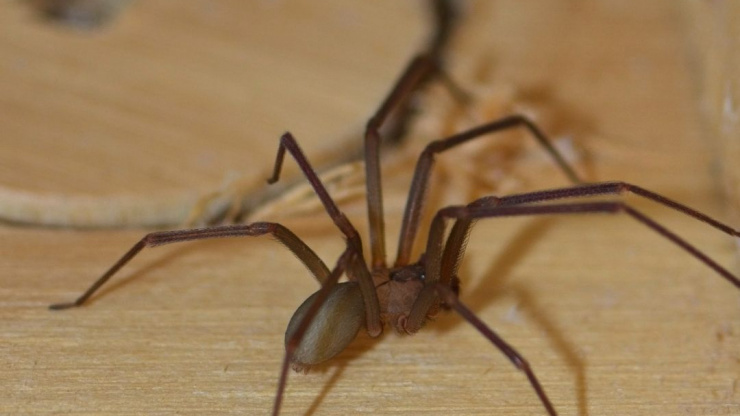 The Most Dangerous Spiders In North America