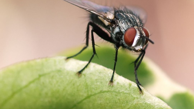 Natural Ways To Get Rid Of House Flies