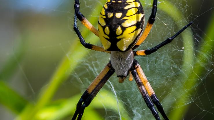 Spider Anatomy | Spider Control Experts
